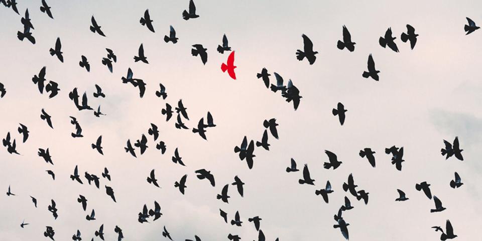 Wil jij ook een rode vogel zijn?
